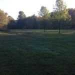 The field area